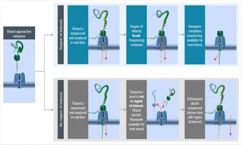 An infographic depicting faster steps in genome sequencing.